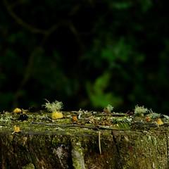 Each one of us is a whole universe (Marceluz (Luca Rojas)) Tags: green nature universe microcosmos ultimateshot matteoprezioso lucarojas marceluz