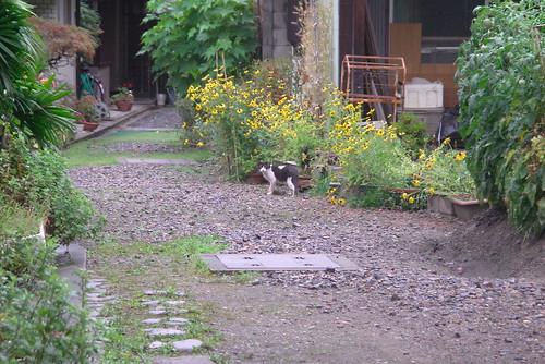 Today's Cat@20080721