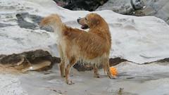 58.狗狗是人類最忠實的朋友