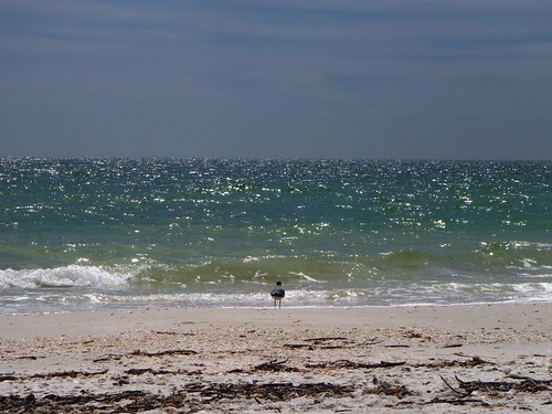 Seagull at Bonita Beach