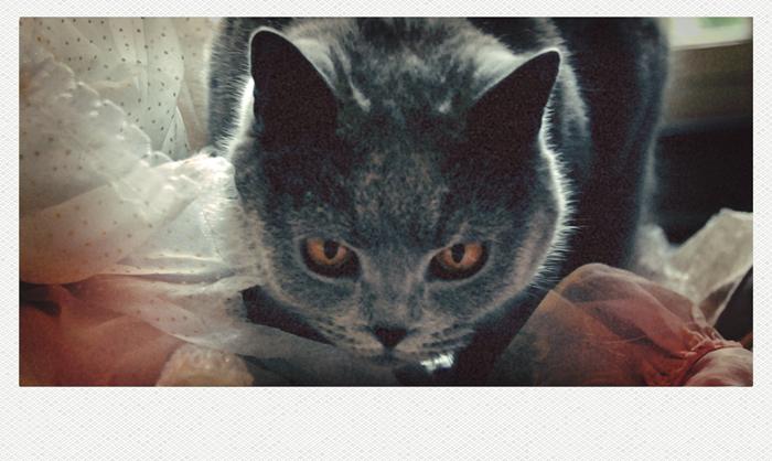 Le chat en dentelle.
