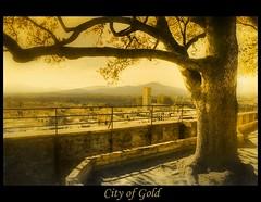 City of Gold (♥ Damona-Art •.¸¸.•´¯`•.♥.•´¯`) Tags: city trees light italy tower photoshop gold nikon italia raw lucca filter tuscany hdr toskana cokin 18200vr diamondclassphotographer flickrdiamond p125s thesecretlifeoftrees