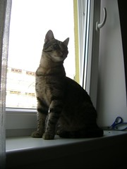 She-Kitty 2008-08-09