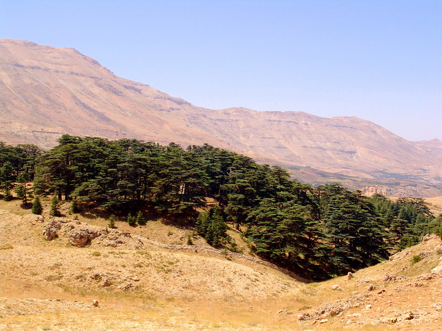 Cedars of God image