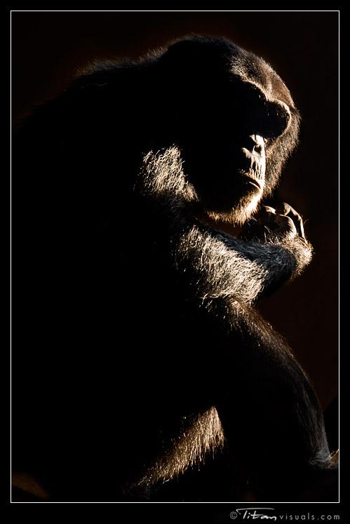 titanvis_2797_ape.jpg