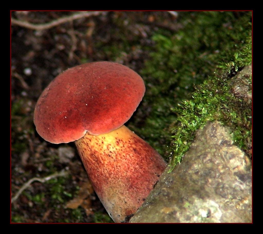 Moss and a Mushroom
