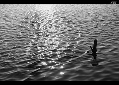 Untill... (Sridhar Venkat) Tags: blackandwhite bw lake abstract tree alone cut sri minimalistic minimum sridhar blackandsilver minim d80 nikond80 nikkor18135mm d8018135mm sridharvenkat sriphotography lakeviewsilver