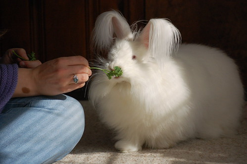 Stitches with parsley