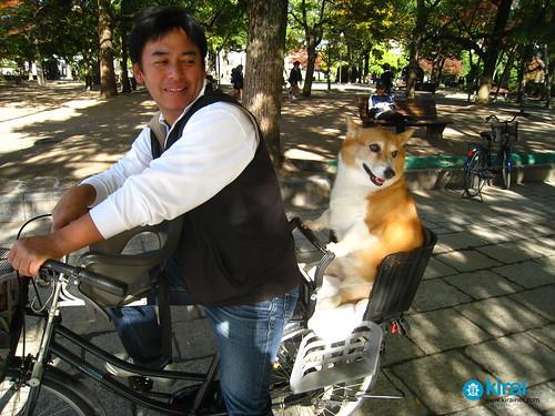 Perro en bici class=