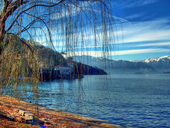The Tree (esinuhe69) Tags: blue sky italy mountain lake tree montagne lago italia riva blu branches side lakeside cielo maggiore albero rami laveno naturepoetry abigfave theunforgettablepictures goldstaraward esinuhe69