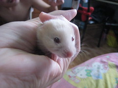 IMG_1740 ([bakaWOOFY]) Tags: hamsters