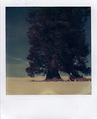 (Raymond Molinar) Tags: ca camera snow tree film creek lunch sx70 break artistic time land zero squaw