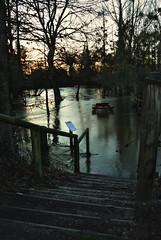 La nature se rebelle... (boisgerninie) Tags: bretagne brocliande 18135 d80 innondations iffendic lemeu paysdemontfort