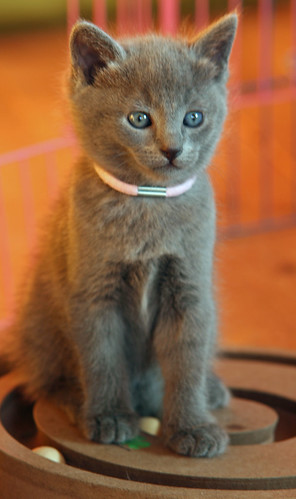 Kittens of Pegusha - Page 2 3245075690_4538b4c8ee