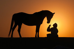silhouette moment (majedphotos.com) Tags: travel sunset sky horse orange sun man black hot nature look animal silhouette yellow set landscape sand nikon friend friendship desert finger wildlife uae workshop moment attention majed learn voluntary stev naturesfinest blueribbonwinner vwc nikonstunninggallery mywinners kwtphoto kvwc kuwaitvoluntaryworkcenter kuwaitvwc