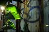 (Mayastar) Tags: leaves milano urbanpoetry mayastar