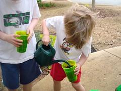Watering Peas