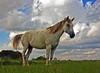 Sweeping (edwardleger) Tags: sky horse beautiful grass rural pretty majestic 2008 edwardleger exquisiteimage edwardnleger