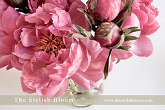 Pink Peonies bouquet (L'esprit Sud Magazine) Tags: new pink flowers wedding summer sky plant flower color macro cute love nature glass floral monochrome beautiful beauty rain shop easter grey born bride spring stem flora pretty day purple natural blossom sweet outdoor head pastel background seasonal blossoms drop valentine romance fresh pale petal mothers event gift dating bunch bloom vase valentines romantic florist colored bouquet bud bridal arrangement freshness peonies weddingflowers peonie onlinemagazine diamondclassphotographer flickrdiamond pinkpeoniesbouquet thestylishbloom freshflowerideas