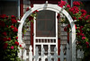 {rose-covered cottage} (pam ullman) Tags: flowers roses lbi longbeachisland charming drivebyshooting beachcottage quint stopthecar