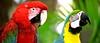parrot19rw