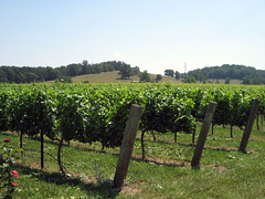 vineyard at laurel gray winery