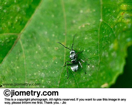 Ant scavenging on a leaf
