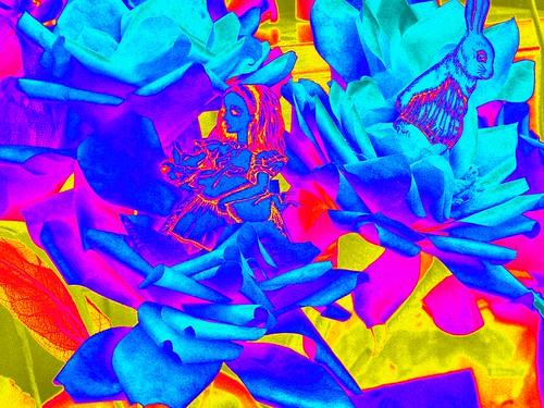 wonderland tea roses
