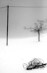 a few steps in the silent (Beshef) Tags: snow tree silent iran line  barbwire
