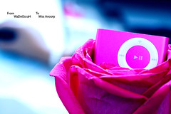 To You (Weda3eah*) Tags: flower rose pin ipod by me weda3eah qtr miss anooty best friend love yuo much goldenvisions