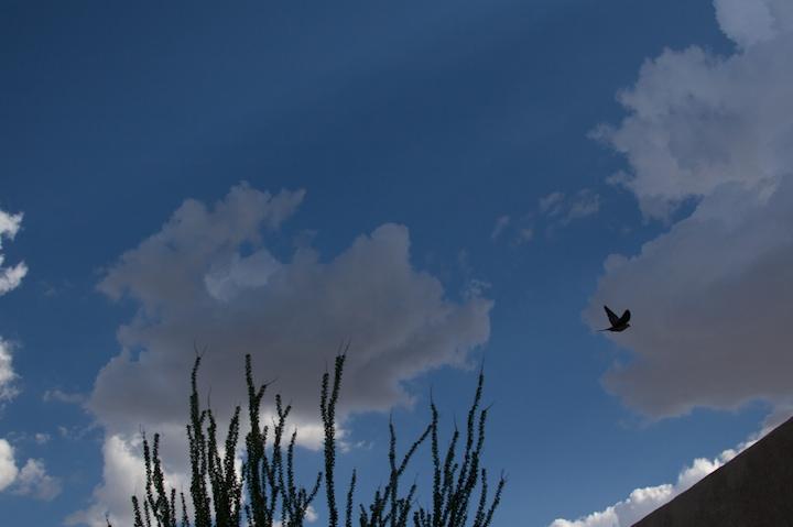 2657945467 cdb5aac8d6 o fly away