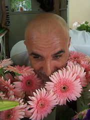 Natural or not? Doal m deil mi? (Tulay Emekli) Tags: pink flowers shiny head gerbera surprise senseofhumour meinthemirror denisdemenace