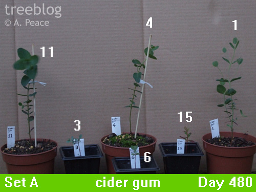 cider gums Nos. 1, 3, 4, 6, 11 and 15