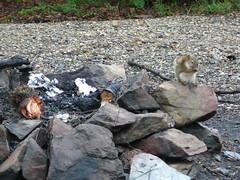 Ardillas en el campamento - Dalton Highway Alaska