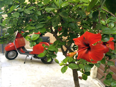 Red two (Vince the photographer) Tags: sicilia marsala