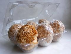 honderdjarige eieren