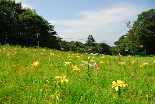 軽井沢プリンスゆり園