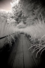 The Aisle (infrared). (coulombic) Tags: park plants oregon canon portland ir japanesegarden path walk peaceful tourist calm foliage aisle walkway infrared 5d canon5d canoneos attraction washingtonpark digitalinfrared infraredfilter infraredcamera canoneos5d gabefarnsworth canonef1635mmf28l onlyyourbestshot maxmaxcom 1on1photooftheweek infraredlight canoninfrared converteddigitalcamera 1on1photooftheweekseptember2008 infrareddigitalphotography coulombic ldpllc canoneosinfared