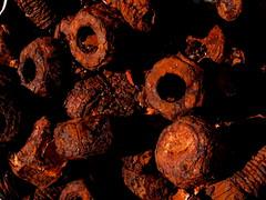 roosty bits : graveyard for bits off lighthouses (pamelaadam) Tags: autumn macro digital scotland arty aberdeenshire meetup fotolog september 2008 closup fraserburgh thebiggestgroup scottishlighthousemuseum cpftppred