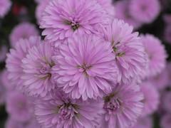 """Little bouquet (""""KIUKO"""") Tags: flower macro bouquet  posy bunchofflowers  masterphotos"""