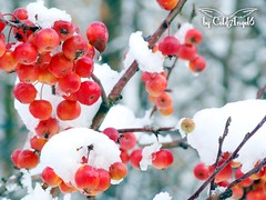 Winter ( ColdAngel6 ) Tags: winter color photography europe farbe naturesfinest coldangel6