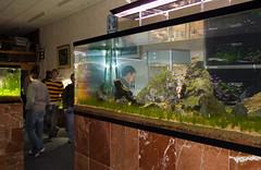 TGM ADA Demo - Tank Shot (Stu Worrall Photography) Tags: green ada tank stu machine demonstration meet planted aquascaping tgm stuworrall ukaps ukapsorg worralltgmthegreenmachineadademonstrationplantedta