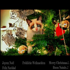 Merry Christmas, Love & Peace for All Flickr's Friends (Osvaldo_Zoom) Tags: christmas love cat navidad peace noel card natale flickrfriends auguri merryxmas birba