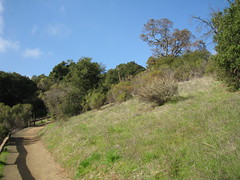 Cora Older Trail - Fremont Older Open Space Preserve