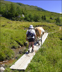 """Don't rush me - I live here......"" (Dave Hanmer) Tags: austria cow tirol track hiking path walk hike panasonic angela tux tyrol ramble rambling zillertal mayrhofen penken finkenberg tuxertal fz8 panasonicfz8 mayrhofen2007 davehanmer davidhanmer"