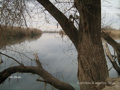 Euphrates River at Jarablus