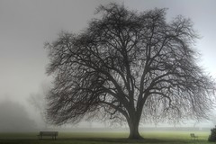 The tree of fog (Eyesplash - There is a change in the air.) Tags: tree fog searchthebest perspective large grand columbia huge british inversion guessed benches heavy immense treeoflife iloveit guesswherevancouver ancienttree anawesomeshot infinestyle treesubject thesecretlifeoftrees photosexplore exploredbycalyn explorewinnersoftheworld rubyphotographer magicdonkeysbest 100commentgroup oraclex novavitanewlife novaexcellence thebestofmimamorsgroups musicsbest mdtbmasterpiece pointcqstrd artofatmosphere brocktonovalstanleyparkvancouver flickrcinated obramaestra treeoftime