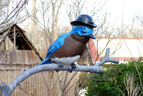 ADP_Mr_Bluebird[2009]