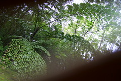 Pana'ewa rainforest Zoo, Hilo (endemanfarley) Tags: palms hilo junglegardens caryota panaewazoo rainforestzoo tropicallandscapes