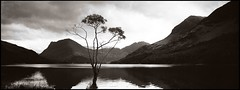 Solitary Tree 2 - Buttermere,Lake District National Park (EXPLORED 04/02/09 #333) (john lunt) Tags: uk light england blackandwhite panorama mountain lake reflection film 35mm john landscape photography photo natural image photos kodak district pano picture rangefinder stormy panoramic photographic hasselblad explore haystacks wainwright cumbria duotone analogue pike 31 160vc portra xpan lonelytree blackdiamond buttermere photogenic lunt coasttocoast theworldwelivein beautifulphoto explored xpan2 fleetwith 45mmlens infinestyle masterpiecesoflightdark flickrclassique qualitysurroundings waterenvirons monochromeformsinvisualarts doublyniceshot